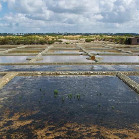 Terre de sel, Guérande