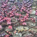 Autumn festivals on the French Atlantic Coast