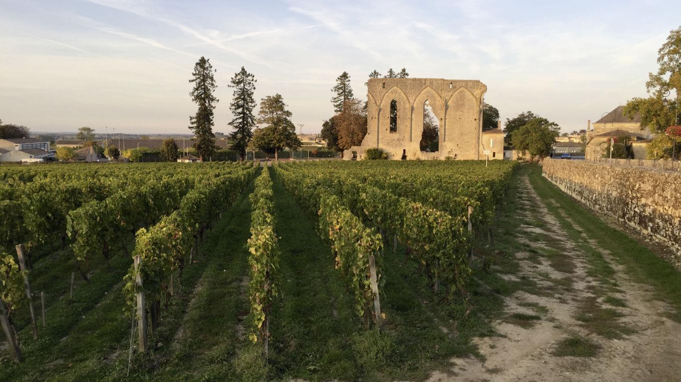 Saint-Emilion vineyard and ruin